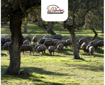Mejores jamones ibéricos de Los Pedroches: un valle con Denominación de Origen